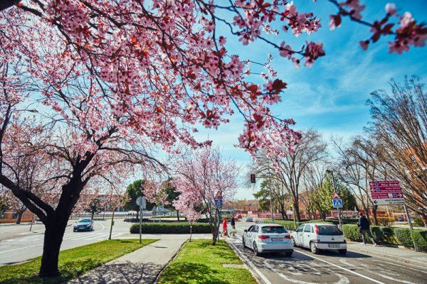 Rivas se oxigena con 500 árboles nuevos