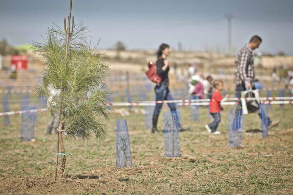 Bosque Scania: 25.000 árboles en 5 años