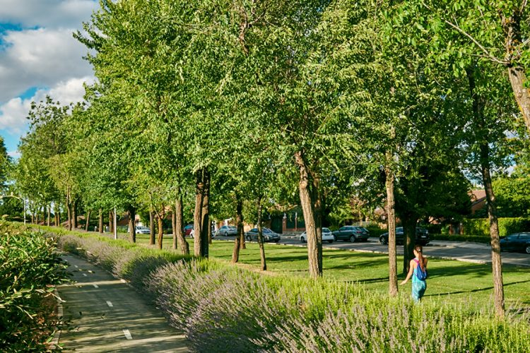 Rivas plantará en octubre 700 árboles anti alergia