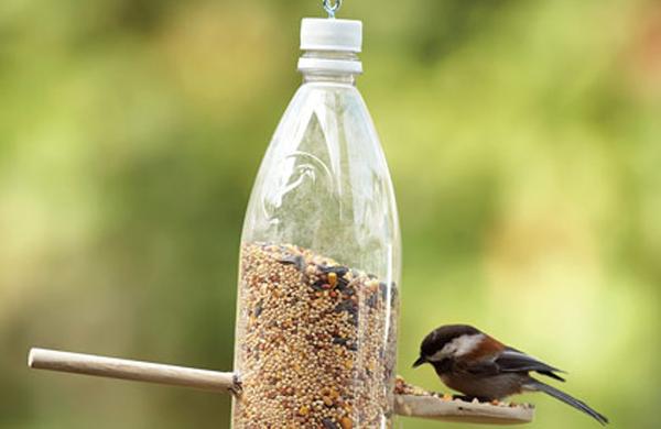 Taller familiar: crear comederos para aves