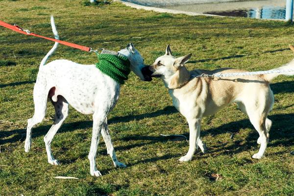 En calle y parques, recoge la caca de tu perro