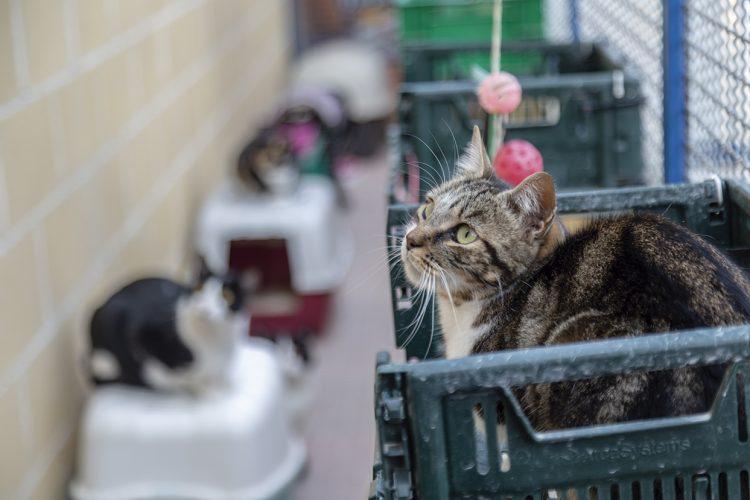 Ya se pueden adoptar perros y gatos en el centro Los Cantiles