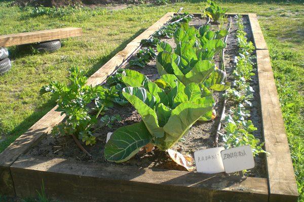 Las plantas auxiliares de un huerto ecológico