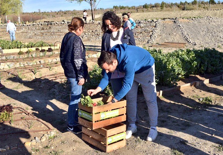 Huertos urbanos: agricultura comunitaria
