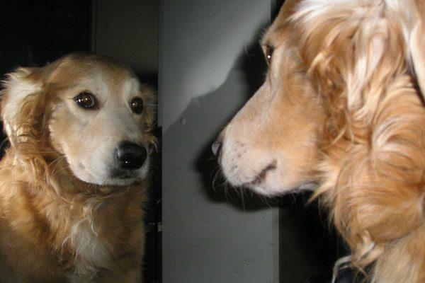 Talleres sobre la tenencia de animales domésticos