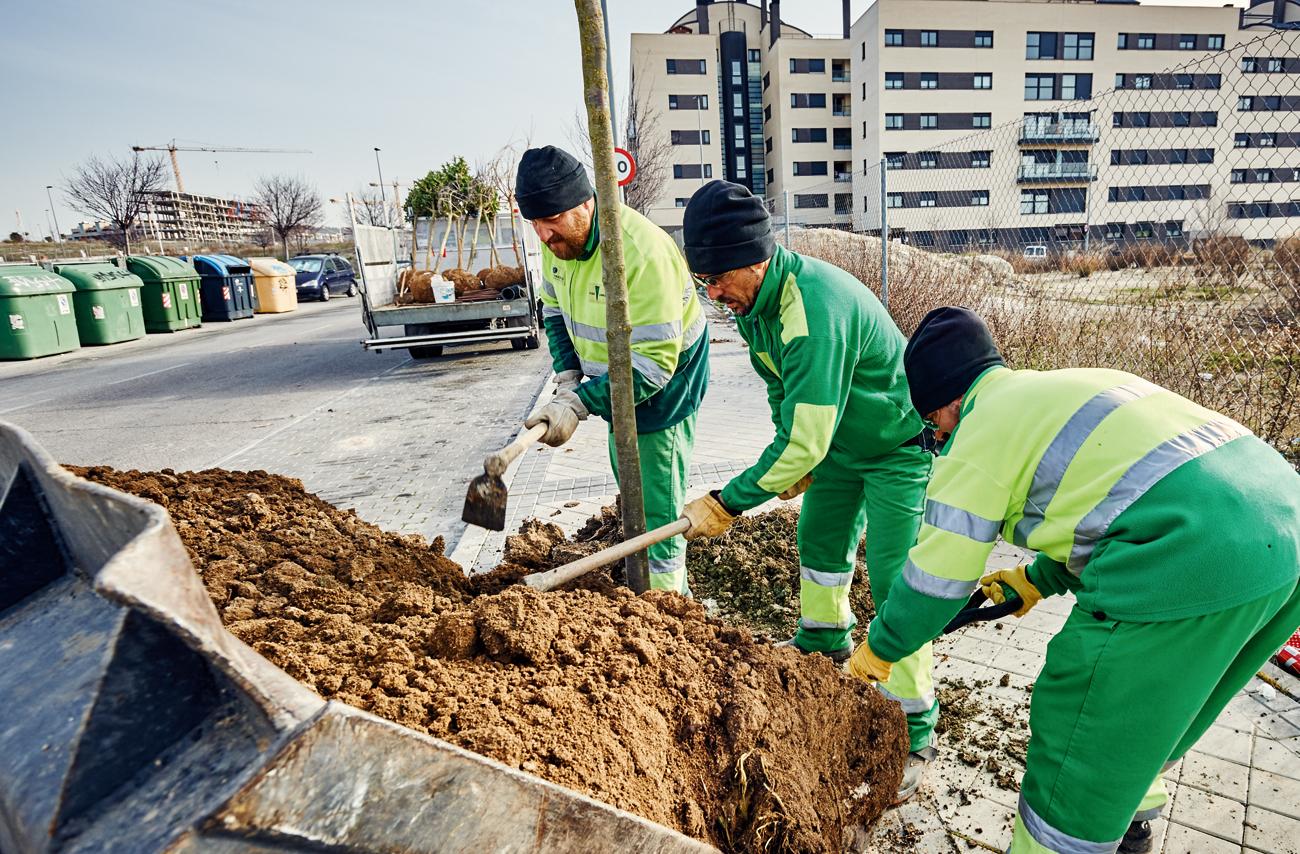 Rivamadrid retoma las plantaciones urbanas