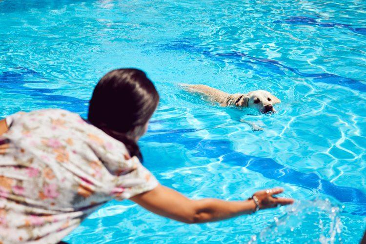 Chapuzón perruno: los canes, a la piscina