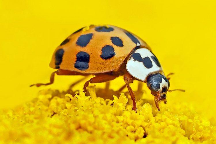 Detectives de la naturaleza: investigando insectos