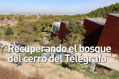 Recuperando el bosque del cerro del Telégrafo