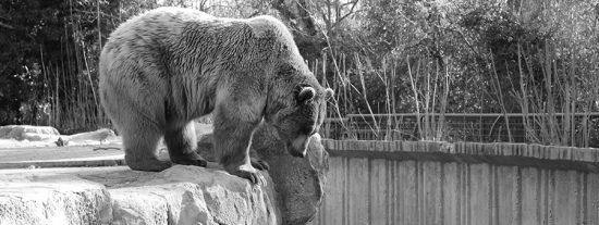 'Cadena perpetua': fotos contra la cautividad animal