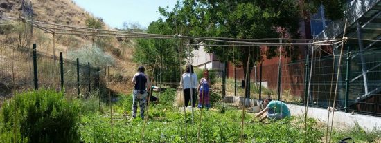 Nuevo ciclo formativo: huertos ecológicos