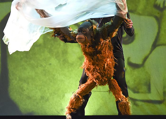 El orangután 'Jojo': de la selva de Borneo al auditorio Pilar Bardem
