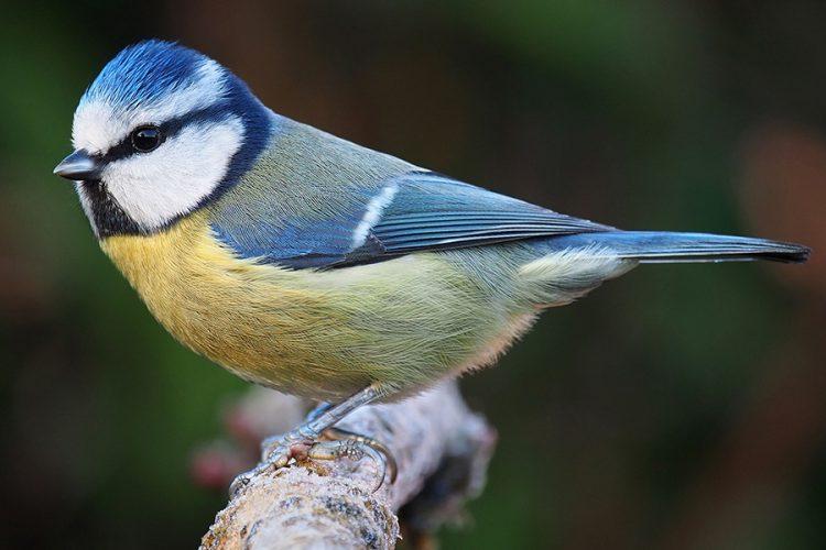 Ecología, aves de Rivas: paseo, comederos y taller