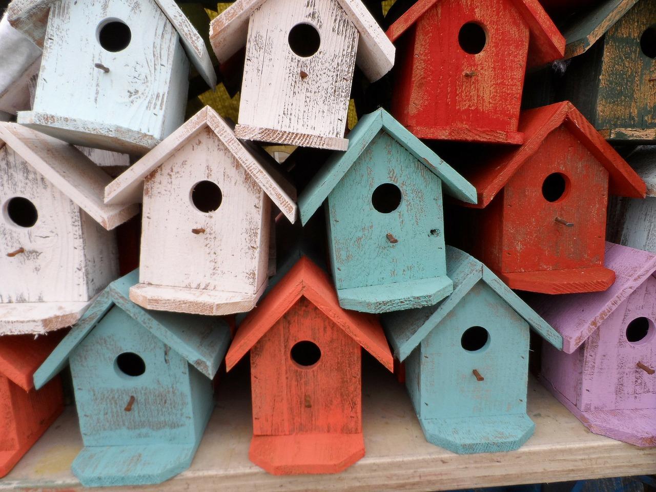 Taller en naturaleza: cajas nido para aves