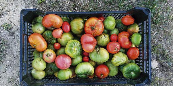 Monográfico del huerto: asociación y rotación de cultivos