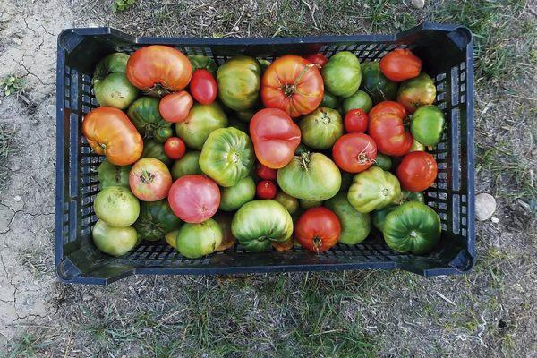 ¿Quieres aprender a cultivar en ecológico desde casa?
