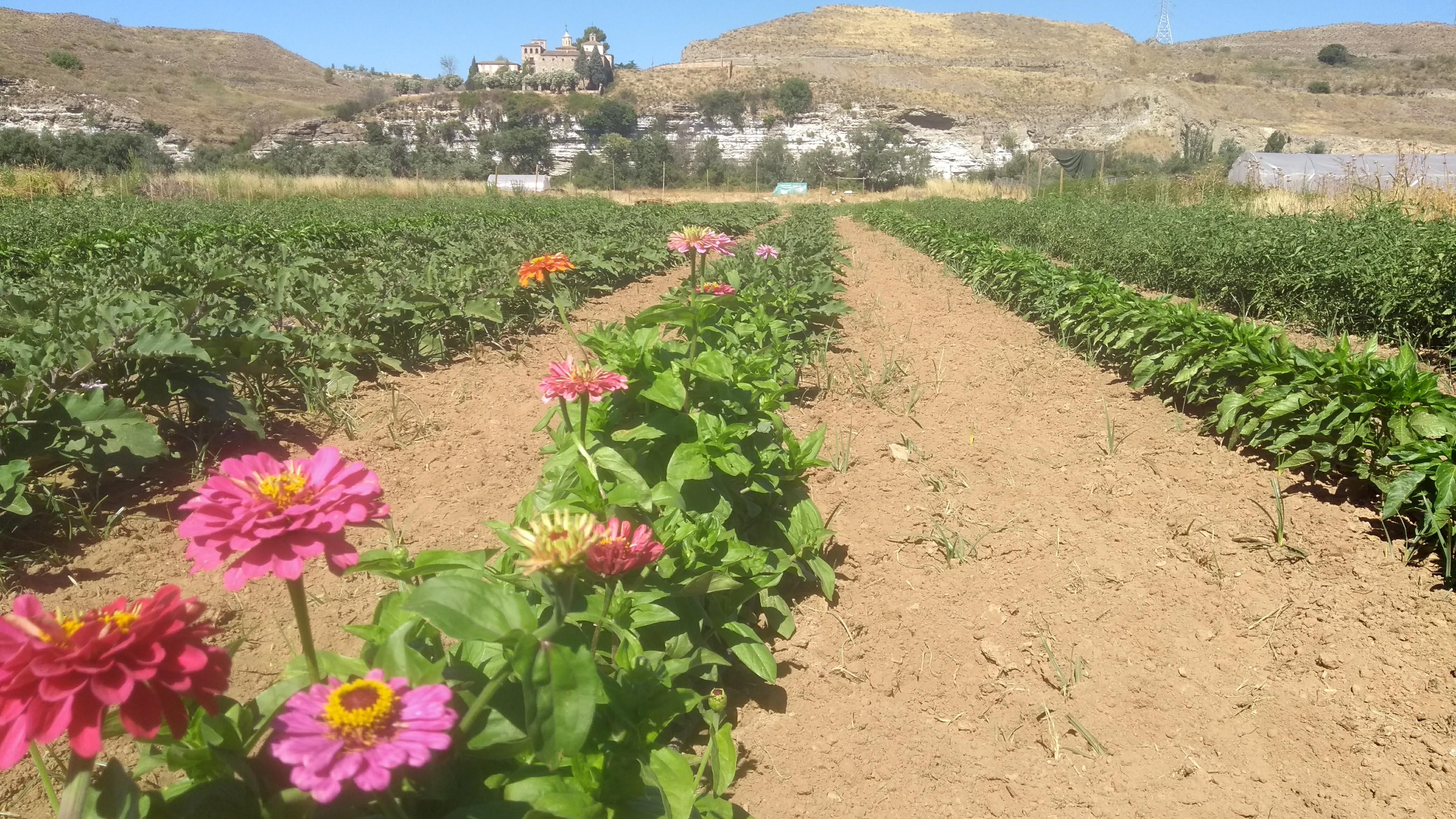 Parque Agroecológico Soto del Grillo. Emprendimiento Agrícola