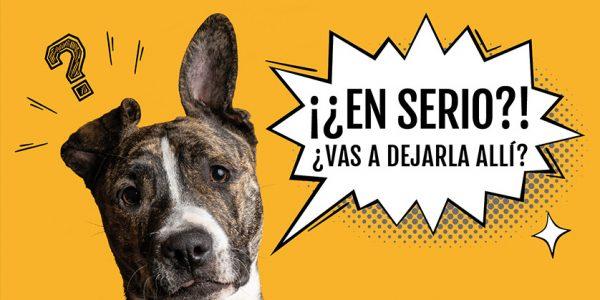 7.800 kilos de excrementos caninos recogidos en 2019