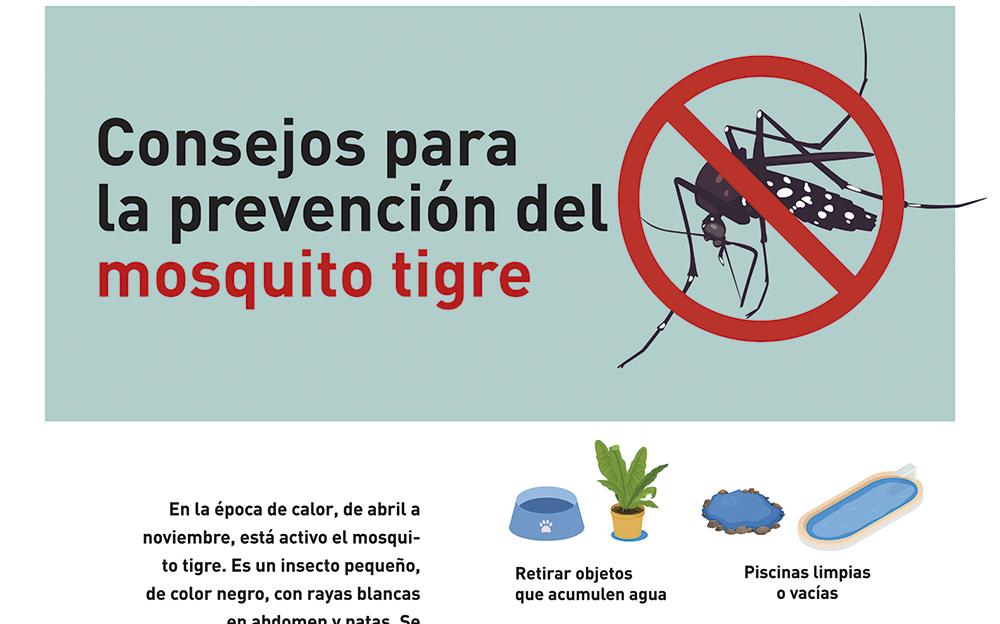 Mosquito tigre: consejos para evitar su proliferación en el entorno doméstico