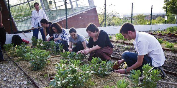 Huerto urbano comunitario: una aventura para aprender