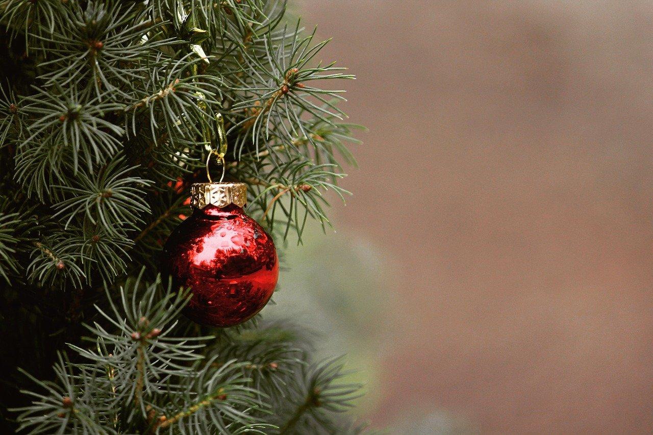 La segunda vida de los árboles de Navidad