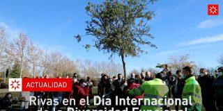 Rivas en el Día Internacional de la Diversidad Funcional