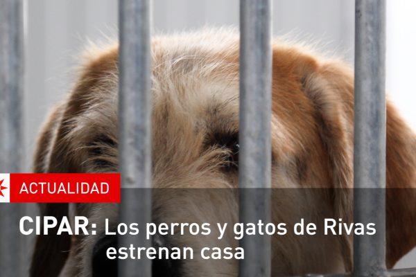 CIPAR: Los perros y gatos de Rivas estrenan casa