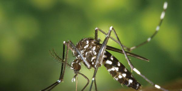 Temporada del mosquito tigre:charla y consejos para evitarlo