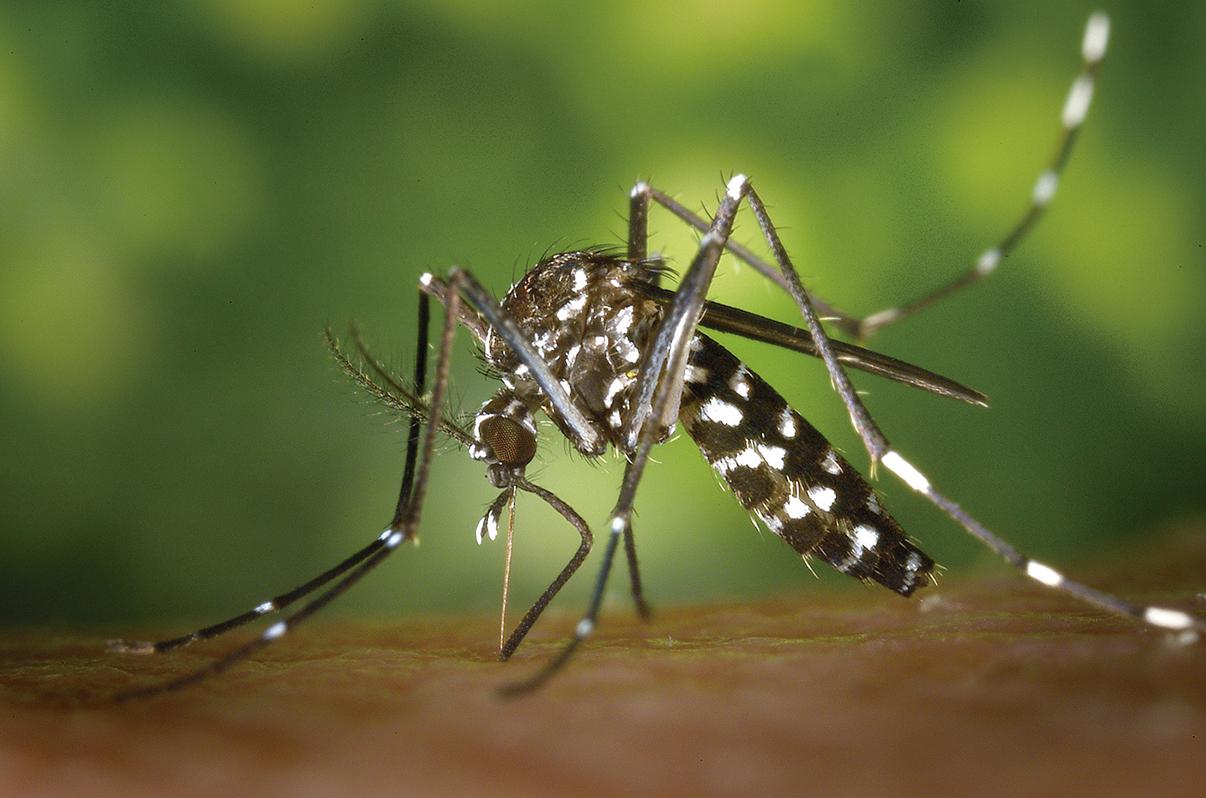 Charla informativa sobre prevención ante el mosquito tigre
