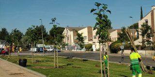 665 árboles nuevos crecerán este otoño en la ciudad